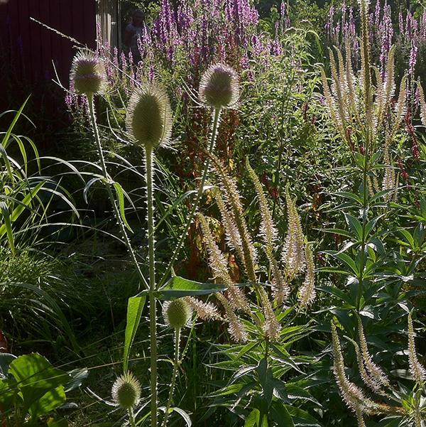 Tuinaanleg-ecologische-tuin-Zuid-Holland